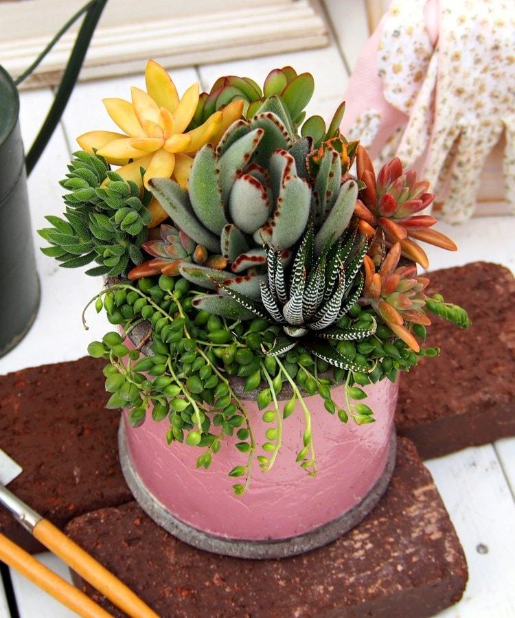 日比谷花壇(ヒビヤカダン) 多肉植物寄せ植え「アンティークポット・ピンク」