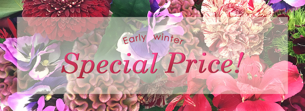 early autumn SPECIAL PRICE